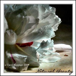 Carol Heppner Natural Beauty