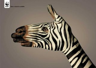Guido daniel zebra_thumb