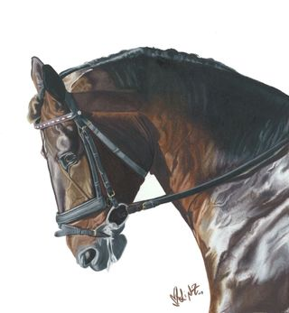 Lindsay Zeltzer Wapanaug 2 horser profile