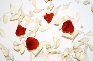 Megan Galante roses2